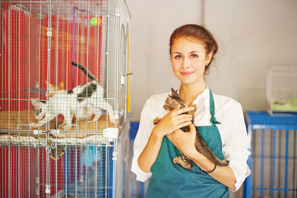 How to help animal shelters