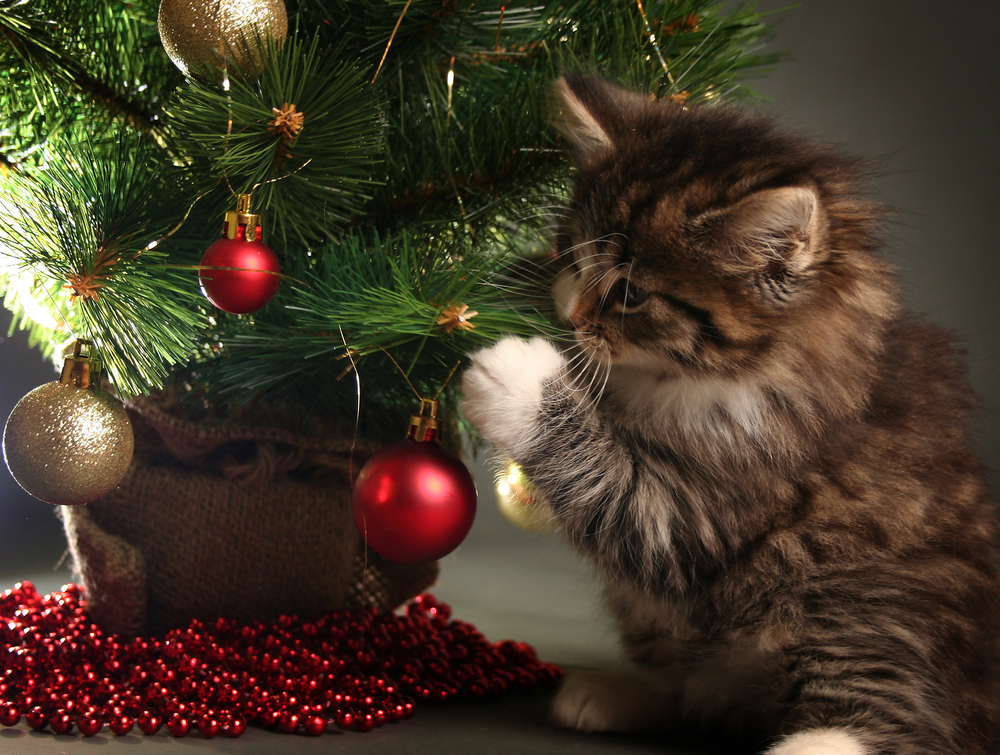 How to keep your kitty away from the Christmas tree