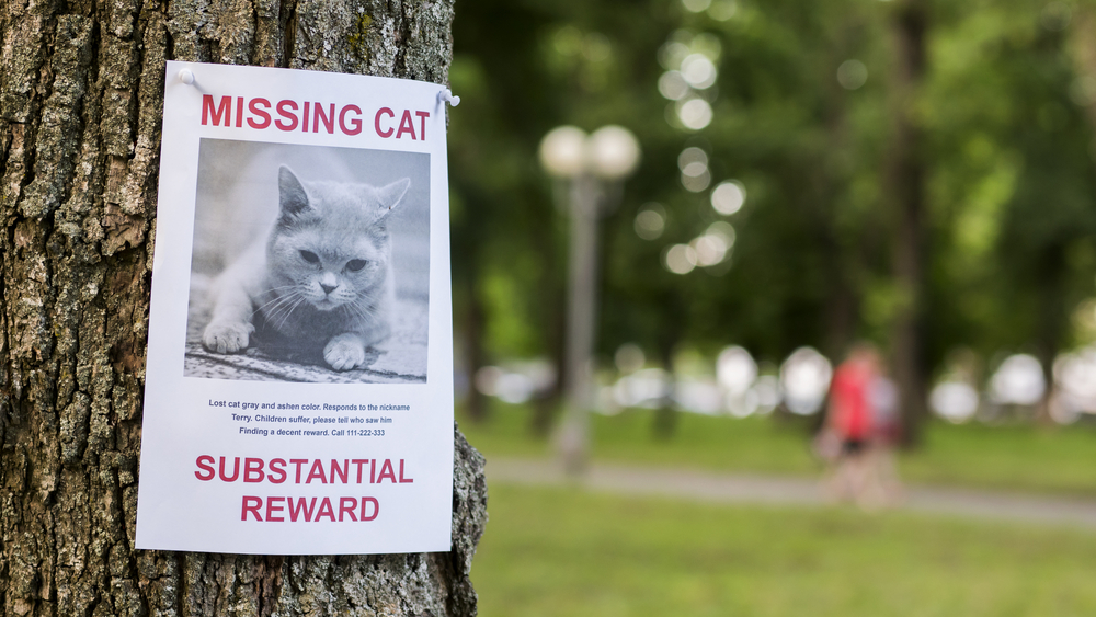 Tips to find a lost cat