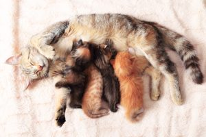 Why a cat might reject her kitten(s)