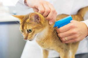 How Cats are Microchipped?