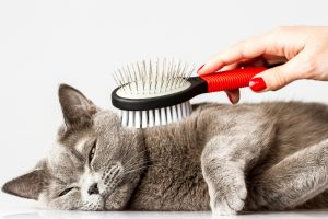 How to Prevent Your Cats Fur From Matting